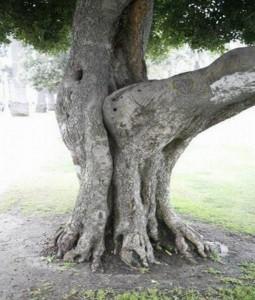 δέντρα σε στύση
