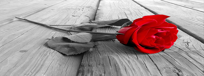 Valentines Day 2013 Red Rose